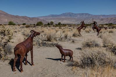 HN-5 2 Desert Bighorn Sheep