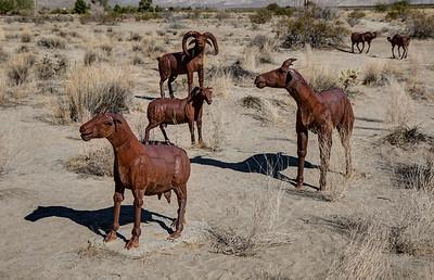 HN-5 3 Desert Bighorn Sheep