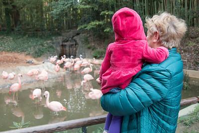 Sophia Samsin Zoo
