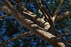 """20-10-2009<br />  <br /> """"El pino mediterráneo de mi vecino""""<br /> <br /> """"My neighbour's Mediterranean pine tree"""""""