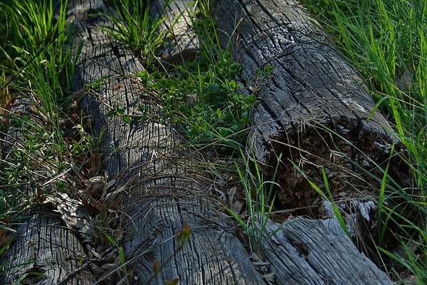 Jubilación - Retirement<br /> <br /> Hace mucho tiempo fui un árbol alto, erguido e incluso apuesto. Luego fui útil durante muchos años trabajando orgullosamente como poste telefónico. Ahora estoy jubilado.<br /> <br /> A long time ago I was an upright, tall and even handsome tree. Then I was useful for many years proudly working as a telephone pole. Now I am retired.