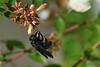 """16-10-2009<br /> <br /> """"Polinización otoñal""""<br /> <br /> """"Autumnal pollination"""""""