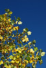 "31-10-2009<br /> <br /> ""Otro día de otoño sin nubes""<br /> <br /> ""Another cloudless Autumn day"""
