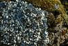 Líquenes en una piedra del camino.<br /> <br /> Lichen on a rock.