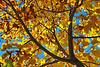 """23-11-2010<br /> <br /> """"Luz y colores de otoño"""" - No es una foto de hoy, fue tomada hace diez días.<br /> <br /> """"Autumn light and colours"""" - Not today, this was taken ten days ago."""