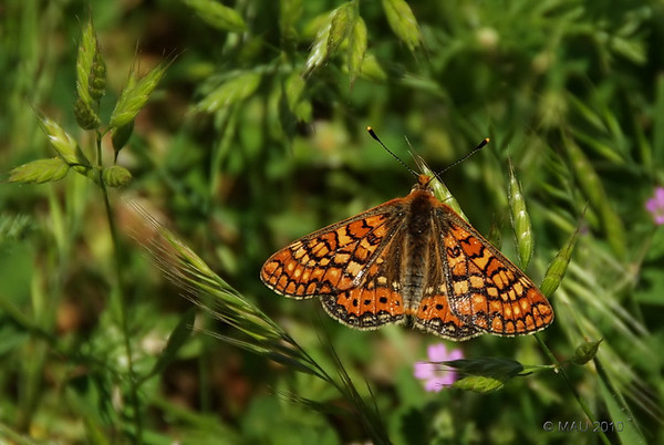 """21-8-2010<br /> <br /> """"Mariposa"""" - Una de las muy pocas fotos que hago a este y otros insectos.<br /> <br /> """"Butterfly"""" - One of the very few pictures I take of this and other insects."""