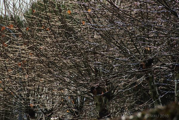 """21-12-2010<br /> <br /> """"No son luces de Navidad"""" - Después de llover toda la noche, esta mañana el sol apareció unos minutos entre las nubes. (Mejor verla en tamaño grande).<br /> <br /> """"They are not Christmas lights"""" - After raining all night, this morning sunshine struggled through the clouds for a few minutes. (Best seen at large size)."""