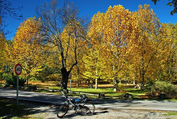 "14-11-2010<br /> <br /> ""Me topé con el otoño mientras paseaba en bicicleta""<br /> <br /> ""I bumped into Autumn while riding my bike"""