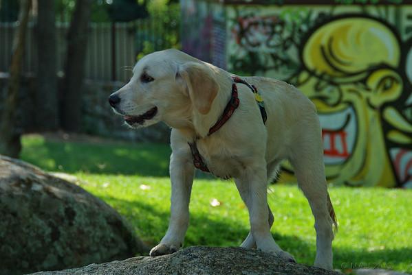 "17-5-2011<br /> <br /> ""Cachorro""<br /> <br /> ""Puppy"""