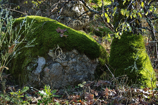 """25-2-2011<br /> <br /> """"Musgo""""<br /> <br /> """"Moss"""""""
