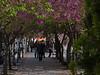 "19-4-2011<br /> <br /> ""Solo es posible en primavera""<br /> <br /> ""Only possible in spring time"""