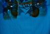 "11-09-2009<br /> <br /> ""Azul"" - Es un vestido de mercadillo tendido a secar al sol.<br /> <br /> ""Blue"" - It's a cheap dress bought in a street market hung out to dry on the sun."