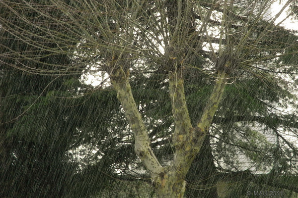"""30-3-2011<br /> <br /> """"Chaparrón de hace un par de días""""<br /> <br /> """"Shower a couple of days ago"""""""