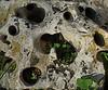 """""""Bola de bolos prehistórica"""" - Según cuentan las crónicas de la época, perteneció a una especie de monstruo que tenía 10 dedos en cada mano. El tiempo y la erosión han hecho que perdiera la forma esférica casi perfecta que tenía. ;-)  (Los detalles se ven mejor al tamaño original)<br /> <br /> """"Prehistoric bowling ball"""" - According to chronicles of the time, it belonged to a kind os monster who had 10 fingers in each hand. Time and erosion have made it loose the almost perfect spherical shape it had.  ;-)  (Details better seen at original size)."""