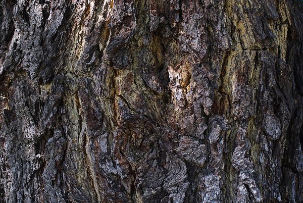 Corteza - Bark