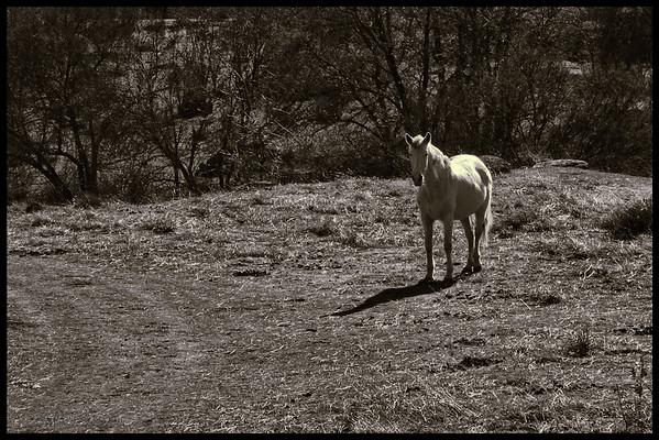"11-Sep-2012<br /> <br /> ""El caballo"" - ""The horse"""