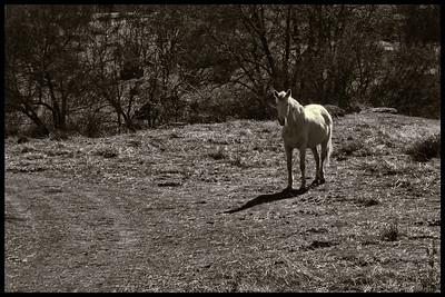 """11-Sep-2012  """"El caballo"""" - """"The horse"""""""