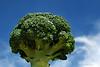 """04-5-2010<br /> <br /> """"Hoy me siento árbol"""" - """"I feel I'm a tree today"""""""