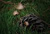 """03-Mar-2012<br /> <br /> """"Setas""""<br /> <br /> """"Mushrooms"""""""