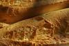 """25-8-2010<br /> <br /> """"El pan nuestro de cada día...""""  (Mejor vista a tamaño grande).<br /> <br /> """"Give us today our daily bread...."""" (Better seen at a large size)."""