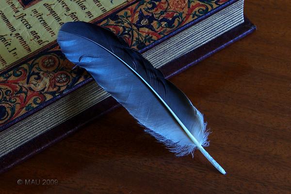 Llevaba tiempo queriendo hacer alguna foto en la que interviniera un libro antiguo que tenemos sobre la mesa del comedor. Hoy me he encontrado esta pluma (de paloma, creo) en el jardín y se me ha ocurrido hacer esta composición. No sé si la composición en si (lo único que he hecho ha sido apoyar la pluma en el libro) y los colores que intervienen son los más adecuados a la misma, pero echaba de menos hacer alguna foto.<br /> <br /> Since some time ago I had in mind taking a photo in which an old book we have on the dining table would be included. Today I found this feather in the garden and I thought about this composition. I am not sure the composition is good at all and specialy if the colours are 'the best' for it.