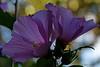 """19-8-2010  """"Luz y Textura de una flor"""" - Ultimamente hago pocas fotos y, además, estoy muy perezoso para procesarlas y publicarlas. A ver si publico unas pocas que tengo de estos últimos 2 o 3 meses. Como casi siempre, mejor verla en tamaño grande. (Esta es la <a href=""""http://www.rancho-k.com/Experimental/Localizaciones/8114088_Bxeqt#975219434_B55xz"""">RESPUESTA</a> a la pregunta que planteaba en la foto anterior).  """"Light and Texture of a flower"""" - I take very few pictures lately and, aside of that, I am very lazy about processing and publishing them. I'll try to upload a few I have from the last 2 or 3 months. As usual, better seen at large size. (This is the <a href=""""http://www.rancho-k.com/Experimental/Localizaciones/8114088_Bxeqt#975219434_B55xz"""">ANSWER</a> to the question posted in my previous picture)."""