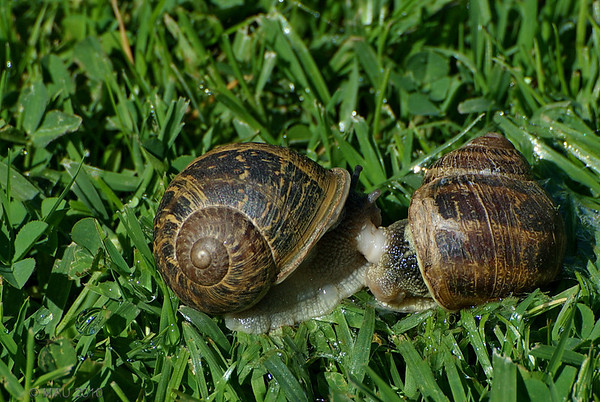 """07-6-2010<br /> <br /> """"Haciéndolo 'a cámara lenta'"""" ;-)<br /> <br /> """"Doing it 'in slow motion'"""" ;-)"""