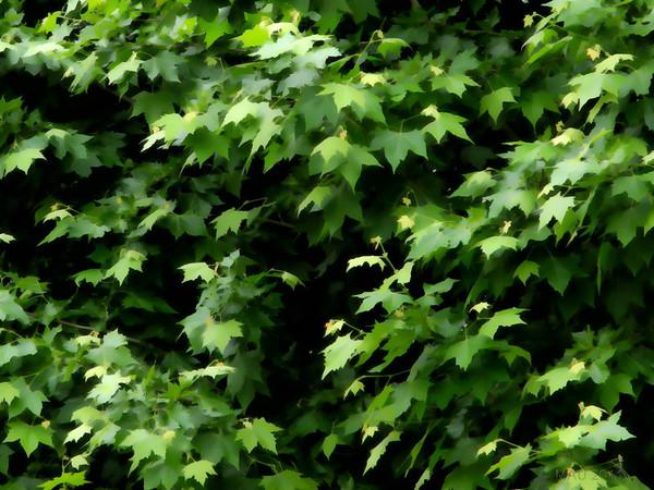 """09-6-2011<br /> <br /> """"Tonos de verde""""<br /> <br /> """"Shades of green"""""""