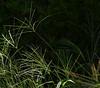 """23-8-2010<br /> <br /> """"Hierbajos""""<br /> <br /> """"Weeds"""""""