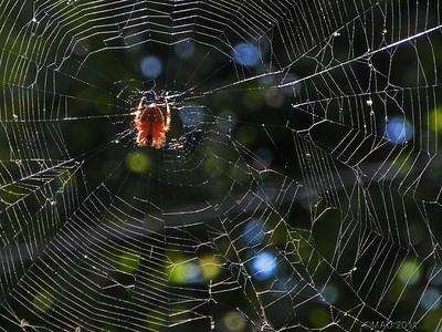 """28-Feb-2012  """"Web"""""""