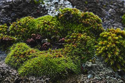 """03-4-2011  """"Musgo""""  """"Moss"""""""