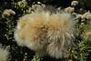 """15-Feb-2012<br /> <br /> """"Fluffy"""""""