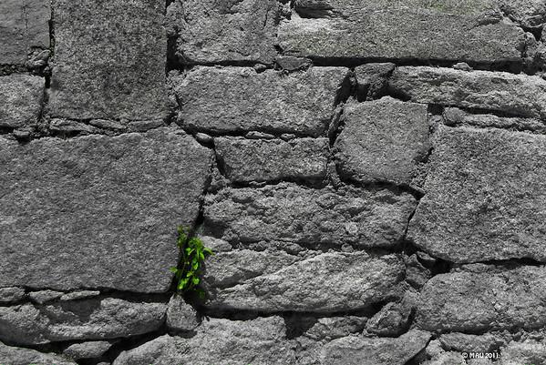 """07-Mar-2012<br /> <br /> """"Luchando por la supervivencia""""<br /> <br /> """"Struggling for survival"""""""