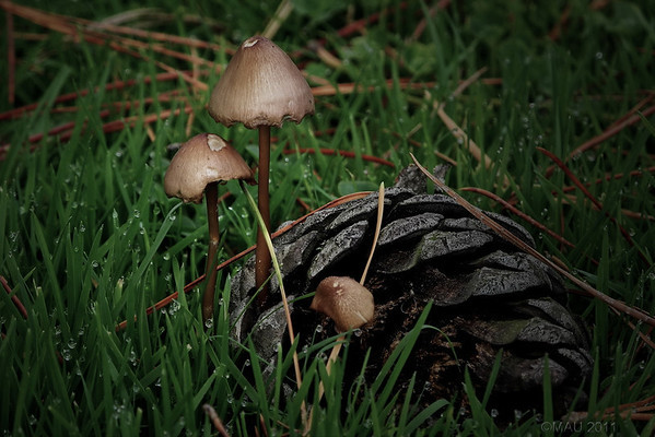 "03-Mar-2012<br /> <br /> ""Setas""<br /> <br /> ""Mushrooms"""