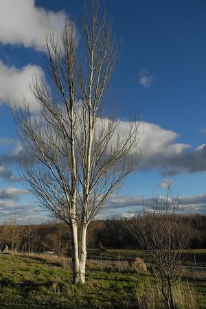 01-Feb-2013<br /> <br /> Luz de invierno - Winter light