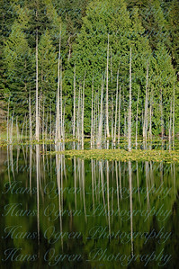 Reflections on Roche Harbor Lake