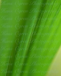 Canary Grass Macro