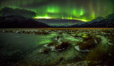 Natures night light
