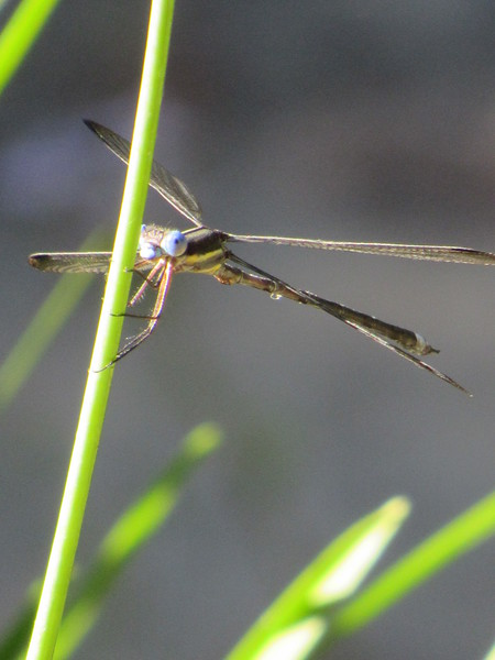 Dragonfly Encounter