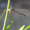 Dragonfly Encounter