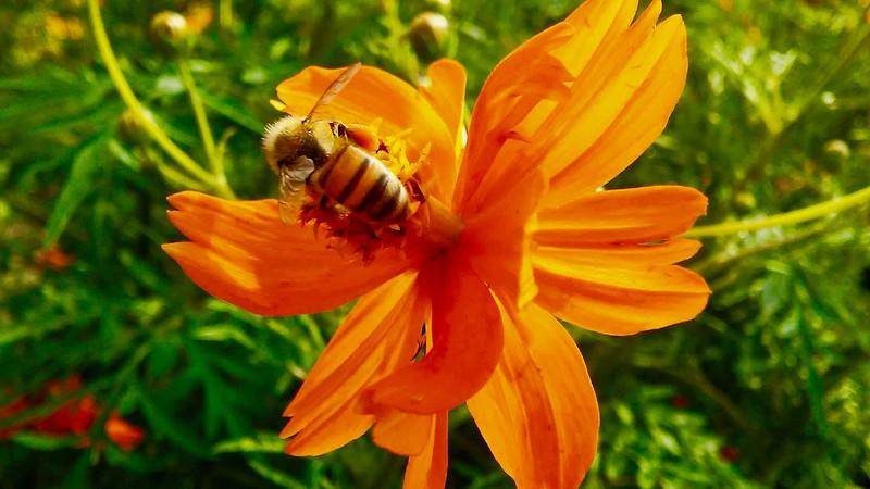Hexter Bee - 2017