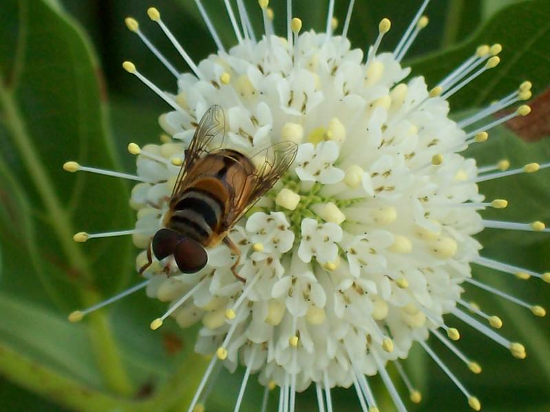 Bee-Present