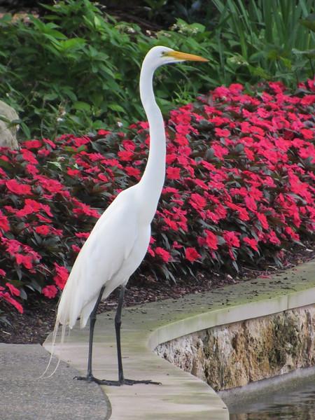 Elegance at the Dallas Arboretum