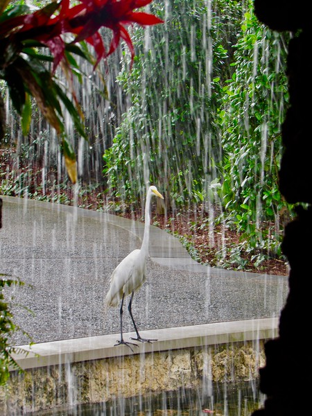Waterfall Egret
