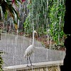 Waterfall Egret