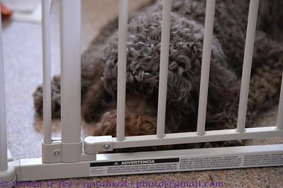 20130427 - Ava's Puppies