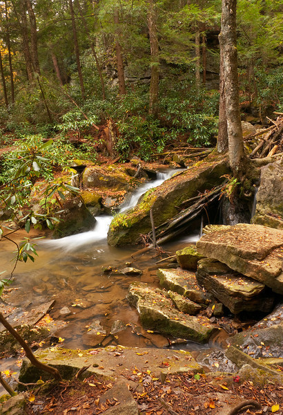 A cascade on Tolliver Creek below Tolliver Falls in the hemlock forest<br /> Swallow Falls State Park, near Oakland, MD