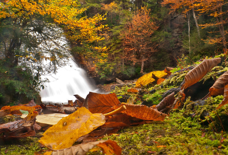 Autumn leaves & moss on boulder at Muddy Creek Falls<br /> Swallow Falls State Park, near Oakland, MD