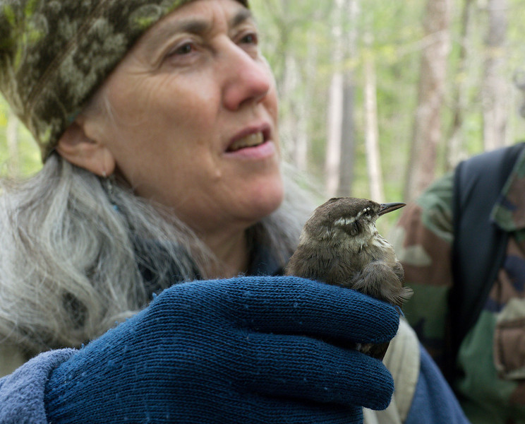 Stephanie discussing Louisiana waterthrush (found on towpath, recently deceased)<br /> C&O Nat'l Historical Park - Carderock Recreation Area, Western Montgomery County, MD