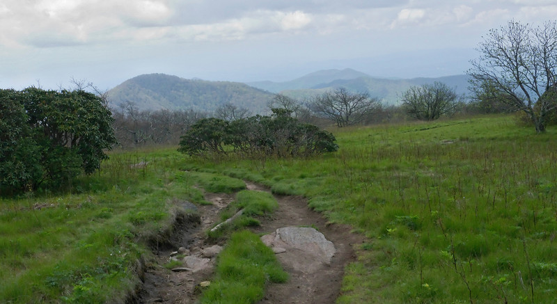 "Heartbreaking ATV damage on ""Craggy Flats"" heath bald, <A HREF=""http://www.romanticasheville.com/Craggy.htm"" TARGET=""_blank"">Craggy Gardens Trail</A> Blue Ridge Parkway, NC (Milepost 364.5)"